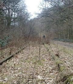 'Positiever dan ooit' over spoorlijn van Nijmegen naar Kleef